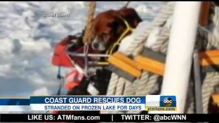 Dog Rescued From Frozen Michigan Lak
