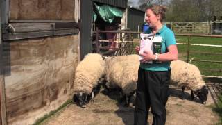 Effective quarantine when worming sheep