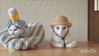 FUNNY CATS ✅✅✅