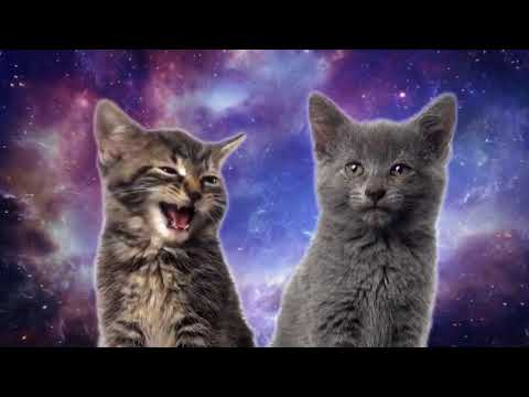 10 Hours Space Cats   Magic Fly by Enjoyker   Video & Singing Cats 1080HD SlowTV
