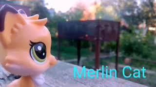 Мистика моей жизни👻 Видела призрака?!😷/Merlin cat