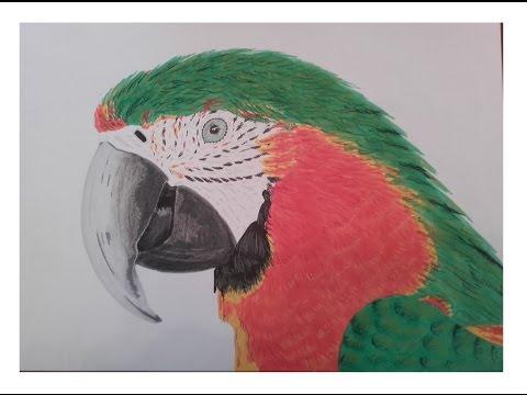 Dessiner Un Perroquet Promarker Et Pastel Sec Speed