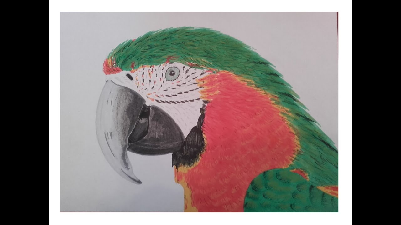 Dessiner un perroquet promarker et pastel sec speed - Dessiner un perroquet ...