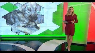 Сложный период в приютах для животных начинается в Краснодаре