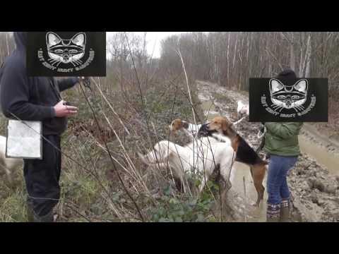 Sabotaging An Illegal Fox Hunt