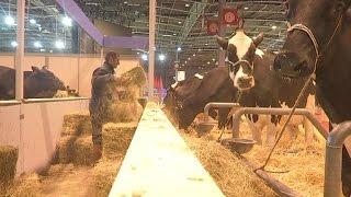 Salon de l'agriculture: l'arrivée des bêtes