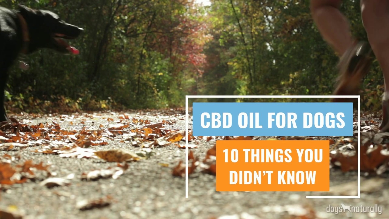 CBD Oil For Dogs: 10 Things You Didn't Know