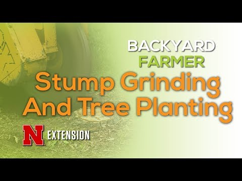 Stump Grinding and Tree Planting