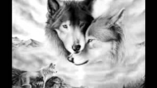 Divlji Andjeli - Voli te tvoja zver