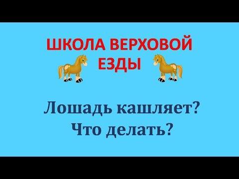 Вопрос: Почему кашляет и чихает домашняя собака Какие причины и лечение?