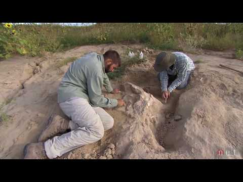 Highway Paleontology | Nebraska Stories