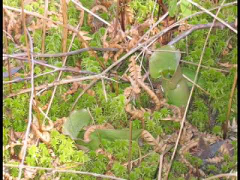 Download What is a Quaking Bog
