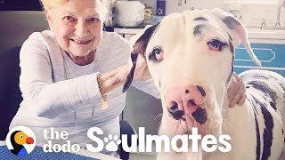 Great Dane Loves His 92-Year-Old Nana | The Dodo Soulmates