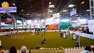 Crufts 2010. Alpha Dog Behaviour Ltd