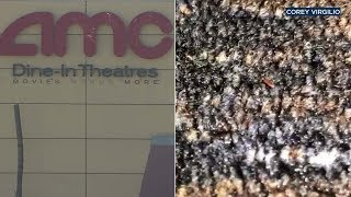 Disturbing cellphone video shows tiny bugs crawling all over the carpet at the AMC Theatre at the Ontario Mills Mall. Details: https://abc7.la/2zxuZLL Don't forget ...