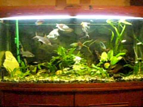 my 300 litre aquarium 1st day using co2 setup