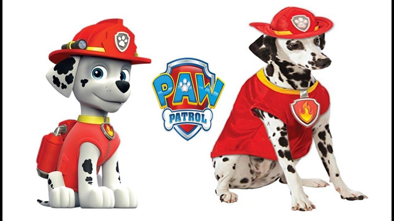 Cani assomigliano personaggi dei cartoni animati