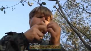 как сделать ловушку для птиц из лески