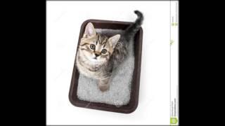 коврики под лоток для кошек