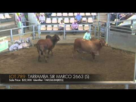 ROCKHAMPTON BRAHMAN WEEK 2014 - DAY THREE   LOT 789