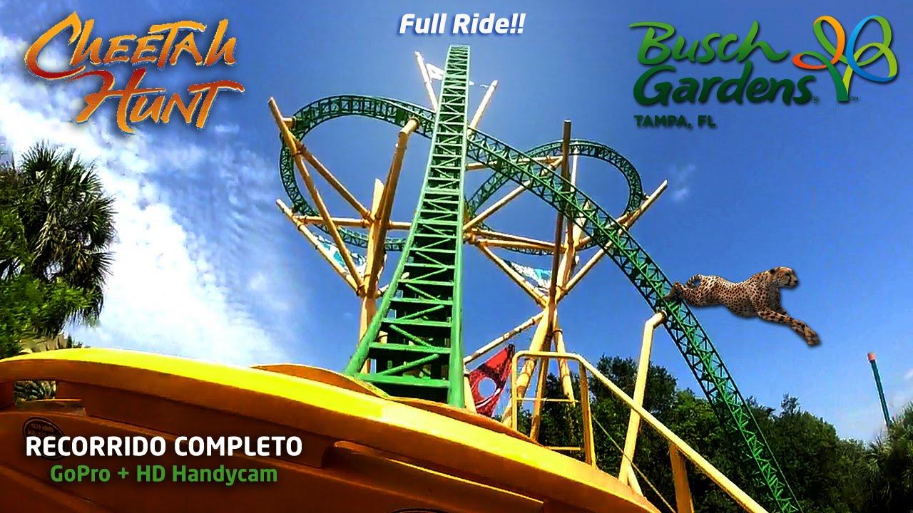 La Monta 209 A Rusa Mas Larga Y Rapida Cheetah Busch Gardens