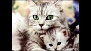милые котенки . cute kitten