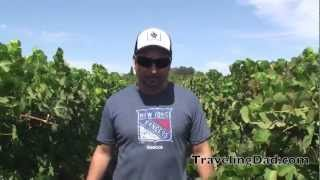 Paso Robles, California Wine Tour