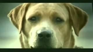 Chú chó đi tự tử vì bị bội tình.flv