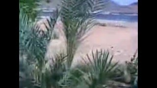 شهيد الأرض النوبية الحاج عبد السيد