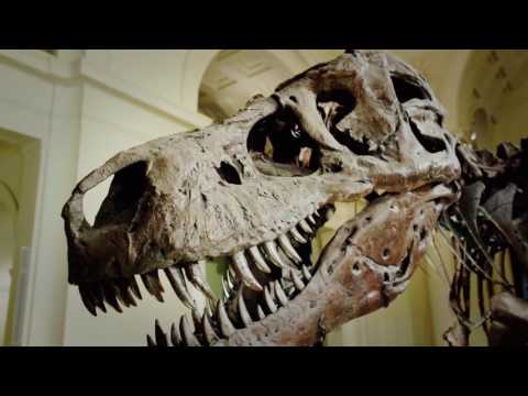 Sue the Dinosaur Finds a New Home in Chicago - Decades TV Network