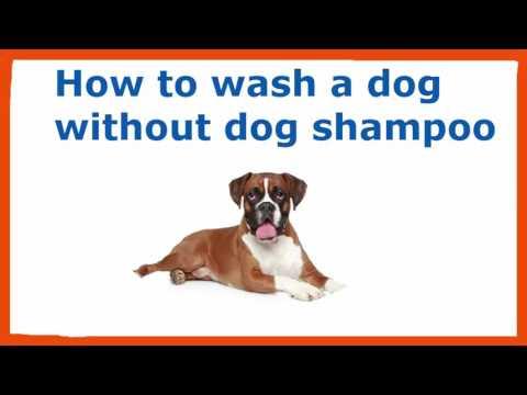 How To Wash A Dog Without Dog Shampoo