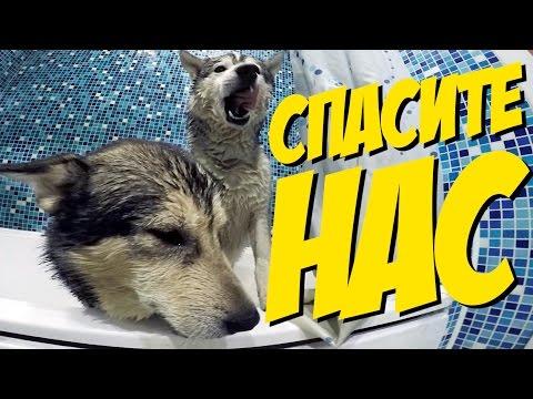 КУПАНИЕ СОБАК / bathing dogs