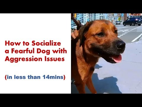 How To Socialize A Fearful Dog With Aggression Issues - Angel Gets Her Wings