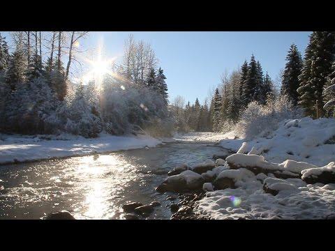 Détendez-vous Avec les Sons de la Nature - Rivière et les Oiseaux