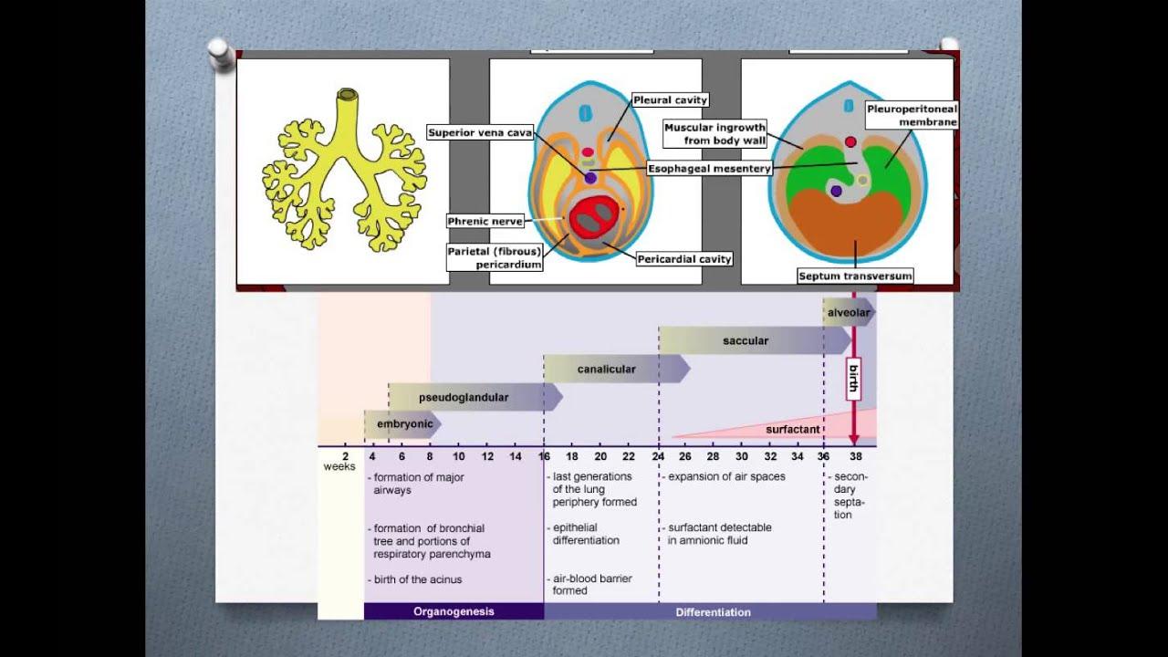 desarrollo embrionario pdf libros