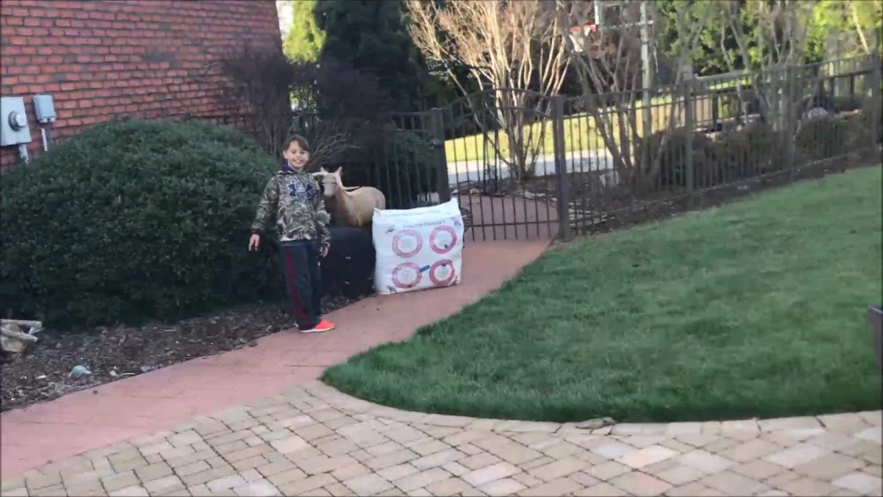 bow practice bear target 10 year old youtube