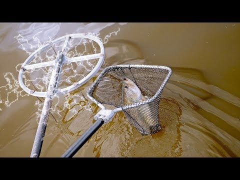 Using ELECTRICITY To Catch GIANT Fish