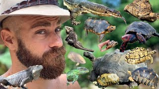 surprising-tour-of-all-my-reptiles