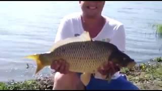 Рыбак тянет рыбу из Головищинского пруда на рыбалке у Звягина в Воронежской области!