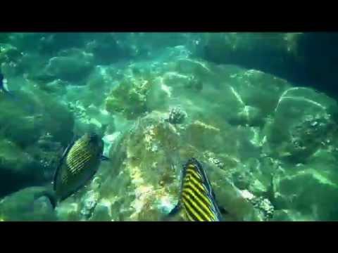 Snorkeling at Pigeon Island