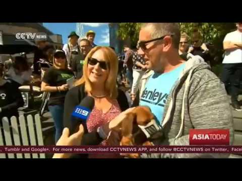 27379 gemeinde Auto CCTV Sausage dog stands out in Melbourne's Dachshund Race