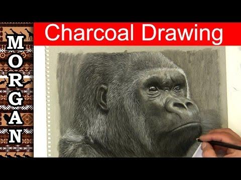 Drawing with Charcoal - Gorilla Drawing - Jason Morgan wildlife art