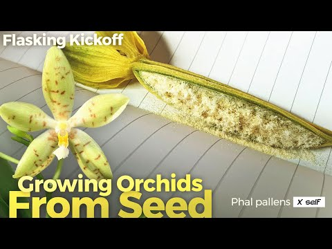 Growing Orchids From