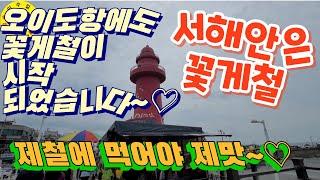시흥 오이도항 어민 수산시장 꽃게시세, 수산물시세 견문…