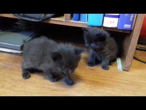 Котики в добрые руки