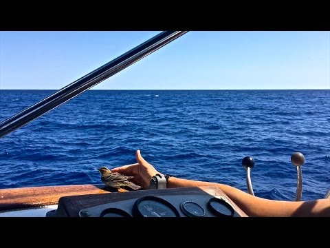 Crossing The Gulf Stream In 34' Trawler