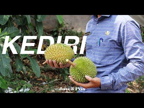 Jawa Pos Belah Durian Edisi 4: Durian Rengkel Kediri