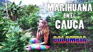 La CIUDAD PERDIDA de la MARIHUANA. Cultivo de Cannabis Legal en el Cauca Colombia. Informe Drogas 50