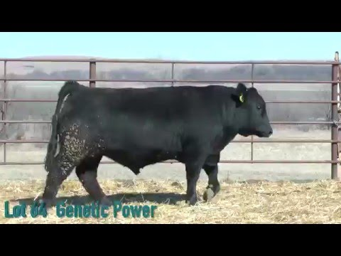 Lot 64 Genetic Power