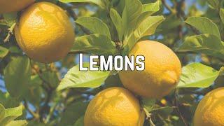 Baixar Ashley Tisdale - Lemons (Clean Lyrics)